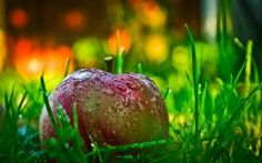 36 Foods That Help Detox and Cleanse Your Entire Body ~ These foods will assist in boosting your metabolism, optimizing digestion, while allowing you to lose weight and fortify your immune system. http://www.wakingtimes.com/2013/12/12/36-foods-help-detox-cleanse-entire-body/
