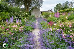Wollerton Old Hall Garden - Rose Garden, Nepata and Path