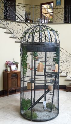 , The bird cage is equally a property for your birds and a pretty tool. You are able to select what you may need on the list of bird cage models and get much more special images. Bird Cage Design, Diy Bird Cage, Animal Room, Animal House, Cage Pigeon, Homemade Bird Toys, Antique Bird Cages, Bird Aviary, Cool Pets