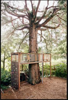 Image result for rock climbing wall for tree house