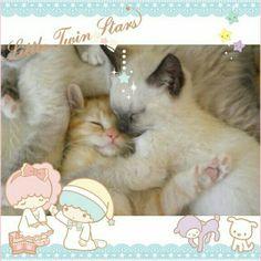 小っちゃくてフワフワの猫ちゃんたち♡  見ているだけで癒されますね♡  みんなのかわいいペットの写真もKawaii★Camで自慢しちゃおう!  Small and fluffy kittens♡  Just looking at the picture makes me happy ♡  Share pictures of your pets on Kawaii★Cam and let us know how cute they are!  Photo taken by cycheung1203 on Kawaii★Cam  Join Kawaii★Cam now :) For iOS:  https://www.kwcam.co  For Android :  https://play.google.com/store/apps/details?id=jp.co.aitia.whatifcamera  Follow me on Twitter :) https://twitter.com/WhatIfCamera  Follow me on Pinterest :)…