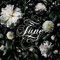 Bzzz Hey June, don't let us down. Bring some flowers and even more sun. Bzzz - The Beetles  #june #flowers #spring #summer #culinarystories #theculinarystories #artisticphoto #photo #photography #typography #typo #font #lettering