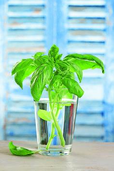 Nevyhadzujte zvyšky zeleniny! Pozrite sa, aký z nej môžete mať úžitok - Pluska.sk Glass Vase, Herbs, Ale, Plants, Decor, Decoration, Ale Beer, Herb, Plant