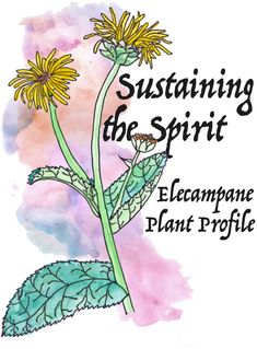 Sustaining the Spirit with Elecampane // Worts and Cunning Holistic Remedies, Herbal Remedies, Plant Identification, Wild Edibles, Knowledge And Wisdom, Medicinal Herbs, Herbal Medicine, Natural Healing, How To Run Longer