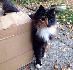 Jasmine los ojos de gata mas irresistibles del mundo (5)