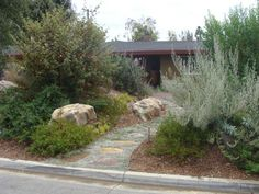 CA Native Plants http://rogersgardenslandscape.com/
