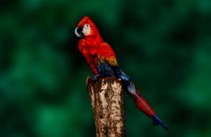 This parrot is actually a painted naked lady