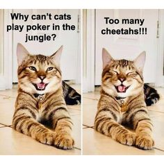 #catmeme #cats #catmemes #cat #catsofinstagram #catstagram #catlovers #funnycats #funnycat #meow #catmemesdaily #sillycat #lolcat #catsarethebest #catlife #catsruletheworld #lifewithcats #adoptacat #catcafe #catsandcoffee Best Cat Memes, Funny Cat Memes, Funny Cats, Meme Meme, Funny Quotes, Hilarious, Wow Meme, Angel Meme, Wholesome Pictures