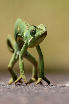 """Well partner, I'll meet you at high noon.   earth-song:  """"Chameleon"""" by Burak Dogansoysal"""