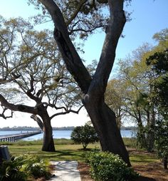 You May Be Wandering: Channeling My Inner Southern Belle - Lowndes Grove Plantation, Charleston