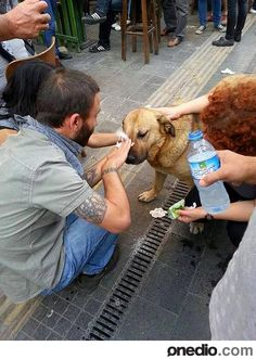 Protesters helping a dog affected by tear gas