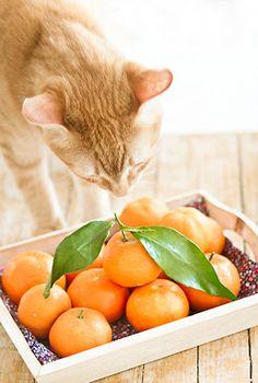Tangerines | La gatta col piatto che scotta