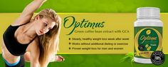 +++Does Optimus Green Coffee Work+++ GCA, one of the ingredients of Optimus Green Coffee, has been examined a lot of times in a number of studies and researches proving its effectivity. One study about Green Coffee bean Extract has shown that it helped in improving fat metabolism and insulin sensitiveness. These studies and a lot more have proven how effective the ingredients of Optimus Green Coffee truly are.