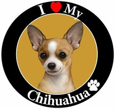 'I Love My Chihuahua' Car Magnet With Realistic Looking Chihuahua Photograph In The Center Covered In High Quality UV Gloss For Weather and Fading Protection Circle Shaped Magnet Measures 5.25 Inches Diameter -- Click image to review more details.