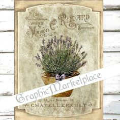 Lavender Flowers Provence Large Image by GraphicMarketplace