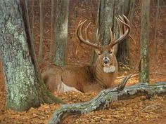 Resting big buck Re Resting big buck Resting big buck Whitetail Deer Pictures, Whitetail Deer Hunting, Deer Photos, Whitetail Bucks, Deer Pics, Amor Animal, Mundo Animal, Big Deer, Hunting Pictures