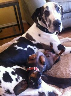 I love my doxie and he loves me we r going 2 b together 4 ever even though we r very different..w r best buds 4 ever