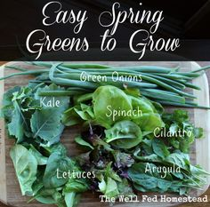 easy spring greens to grow / http://www.wellfedhomestead.com/easy-spring-greens-togrow