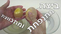 ביצה מתנפחת ומתכווצת - מדע בבית #105