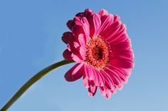 http://www.webjam.com/renceluc  Look At This - Cheap Flower,  Online Flower Delivery,Send Flowers Cheap,Best Flower Delivery,Flowers For Delivery,Cheap Flowers Delivered  Archbishop Chaput, bishops, priests and multitudes of this character of event would be topper.