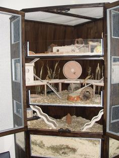 multi-level home for a Chinese hamster