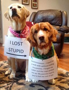 """I LOST STUPID -> Soooo…I went for a walk without telling my parents. I forgot my collar and the cops picked me up. My parents had to pay to bail me out of jail."" ~ Dog Shaming shame - Walkabout"