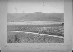 Largest Prune Orchard in the World. 2-3 miles from San Jose. March 26, 1888