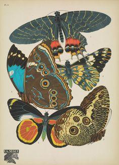 https://flic.kr/p/DivWXQ   n8_w1150   Papillons;. Paris,Tolmer[ca. 1925]. biodiversitylibrary.org/page/48852989