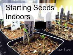 Growing Seeds Indoors,  tips for getting a very early start... Tomatoes and Peppers started in January!?  Yes!