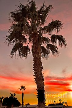Silhouetted Palm Trees II: See more images at http://robert-bales.artistwebsites.com/