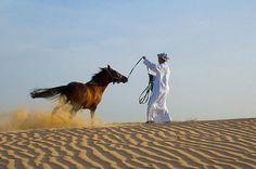 arabic desert - Bing Imagens