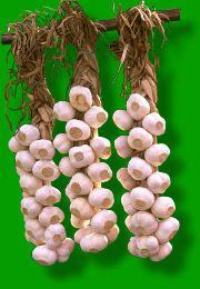 Der Jahreskalender für den Schrebergarten - Knoblauchzöpfe