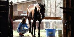Before You Buy Your Kid The Next Best Horse, Think Again - Horse Collaborative