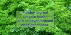 Parsley is a simple yet powerful herb, with many health benefits and even the power to prevent and fight cancer. Natural Cancer Cures, Natural Cures, Natural Health, For Your Health, Health And Wellness, Health Tips, Anti Oxidant Foods, Cancer Fighting Foods, Cancer Facts