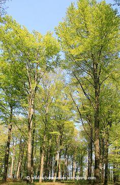 21. März: Tag des Waldes