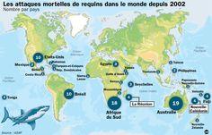 Requins : moins de 100 attaques mortelles dans le monde ces 10 dernieres annees (contre 100.000 deces par an à la suite de morsures de serpents).