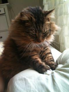 Those Amazing Cats #cats, #pets, #animals, #pinsland, https://itunes.apple.com/us/app/id508760385