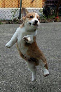 Dancing puppy.funny