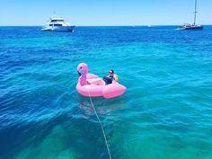 #rottnest #rotto #fromwhereyoudratherbe #thisiswa #lovemyrotto #love #westernaustralia #suntanning #freckles #perthwa #perth #perthlife #perthisok #perfect #flamingo #inflatable #inflatableflamingo #blueskies #bluewater #christmas #christmasbreak #festive #pineapple #cocktails #drinking #rottnestisland #thomsonbay #sunnylifeaustralia #summer by becca020 http://ift.tt/1L5GqLp