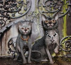 """Lykoi cats--better known as """"The Werewolf Cat"""" due to their coats. Lykoi Cat, Sphynx, Maine Coon, Werewolf Cat, Baby Animals, Cute Animals, Magnificent Beasts, Chesire Cat, Gatos"""