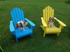 The cavaliers have chosen their favorite Adirondack chairs