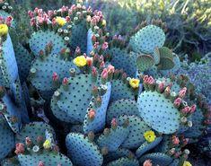 Clic para ampliar Succulent Arrangements, Cacti And Succulents, Planting Succulents, Planting Flowers, Succulent Terrarium, Glass Garden, Succulents Garden, Desert Botanical Garden Phoenix, Botanical Gardens
