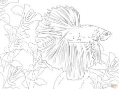 A Group of Fish in Coral Reef Sea Animals Coloring Page  Felting