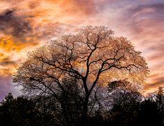Amazing Trees in 13 Pics
