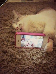 Wow! Сats Take Selfies Too! :)