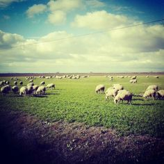 #green #happy #naturel #loves #animal #turkey #eskisehir