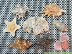 Image titled Clean and Polish Seashells Step 1
