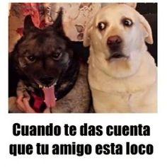 Graciosas Imágenes de perros con frases para facebook (3)