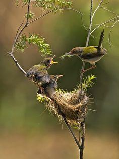 【とり、鳥、Bird】       Feeding Her Young