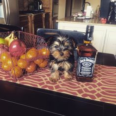 Creed at 8 months & not drinking ....